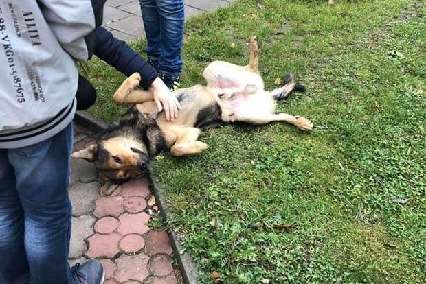 Не творение Божие? Как в Тернополе священник пинками выгонял из храма бездомного пса