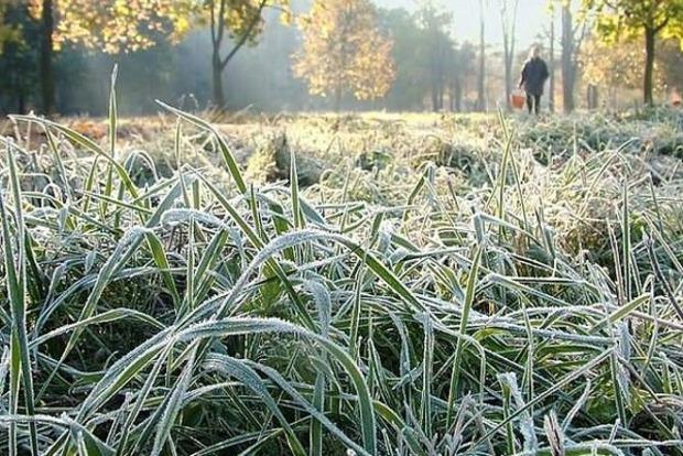 В Украине 10 мая ожидаются заморозки на почве