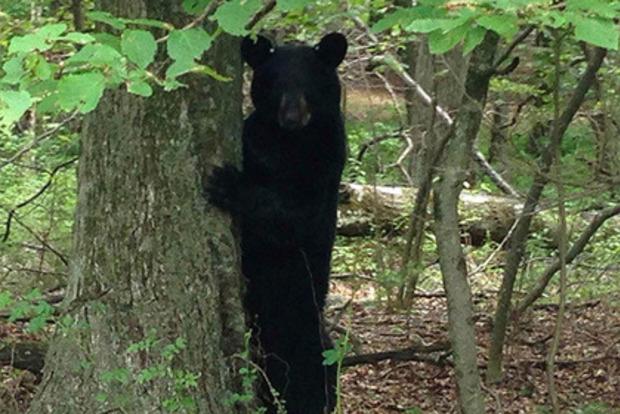 Мать отбила пятилетнюю дочь у медведя