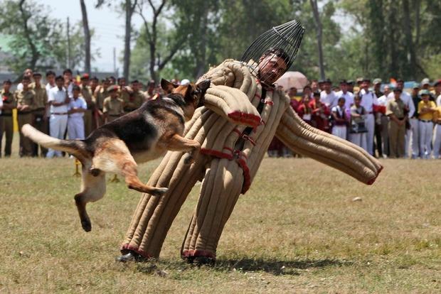 Храбрый пес таможенников поймал группу контрабандистов с Закарпатья