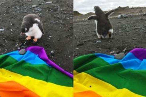 В Антарктиде собираются провести гей-парад