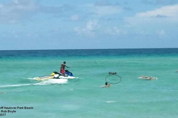 Тупорылая акула покусала нудиста в США