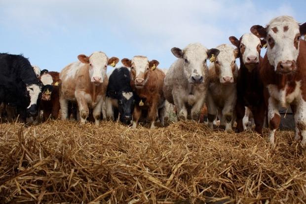 Оккупанты решили устроить в Крыму сельскохозяйственную перепись