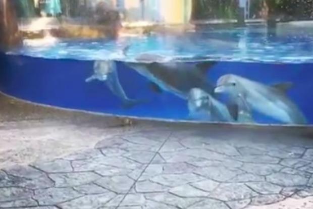 Опубликовано трогательное видео с дельфинами, которые наблюдают за белками