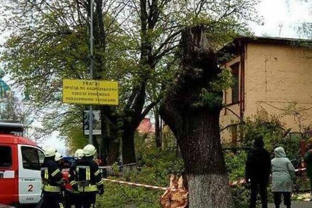 В центре Киева огромное дерево упало на парня с девушкой
