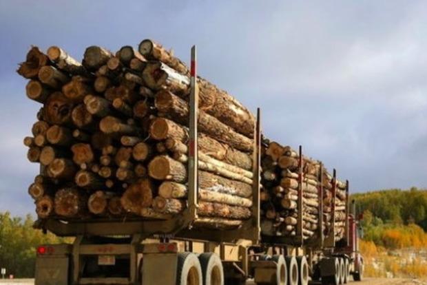 ЕС настаивает на отмене моратория на экспорт леса-кругляка и принятии экологических законов
