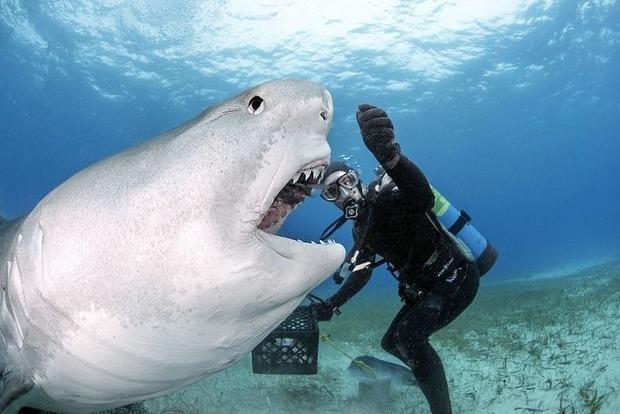 Бешенная акула сгрызла мотор лодки на Багамах (видео)