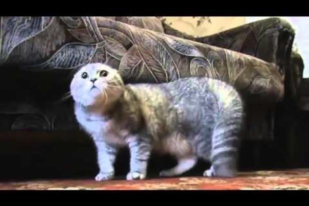 Открой мне! В России разъяренный кот научился говорить