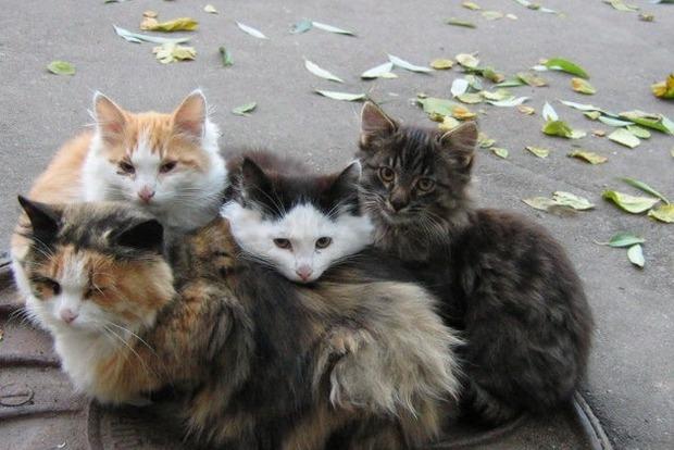 В Киеве будет построен Центр защиты животных
