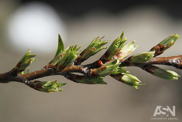 Погода 29 березня: зима потихеньку починає відступати