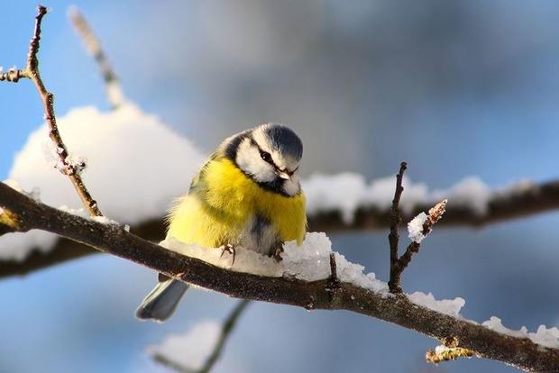 Синоптики сообщили, когда в Украине начнется потепление