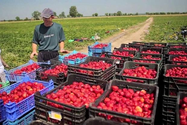 Польша может ужесточить правила трудоустройства для иностранцев