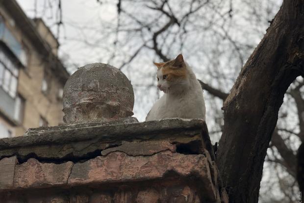 Народные избранники Одессы запретили отлов уличных кошек