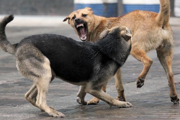 Нападают на беременных и детей. Бездомные собаки покусали 9 человек в Николаеве