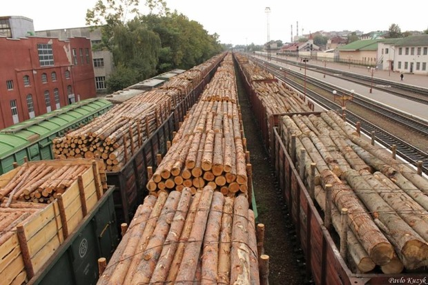 Порошенко отказался криминализировать вырубки украинских лесов