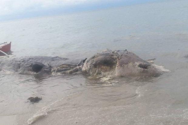 Неизвестная зверушка: На Филиппинах обнаружено гигантское морское чудовище