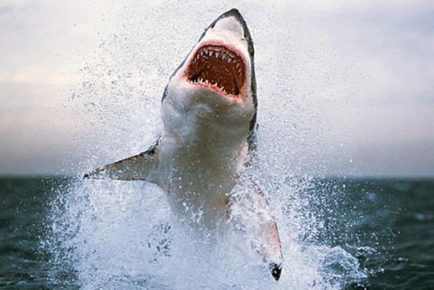 В Єгипті на популярному курорті хлопчикові з України акула відкусила руку