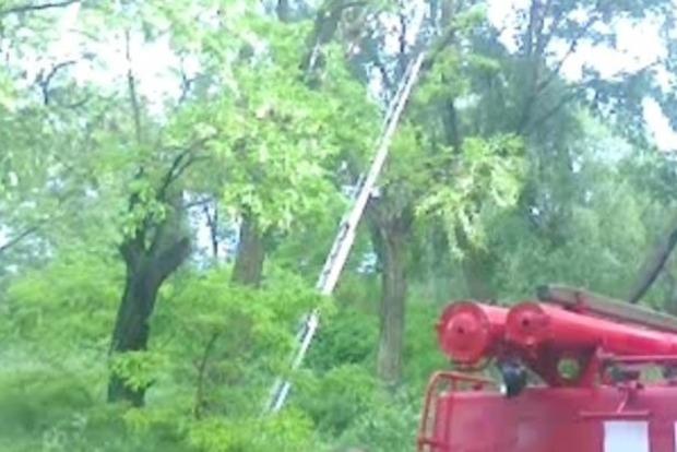 На Кременчугском водохранилище погиб кайтсерфингист, врезавшись в дерево