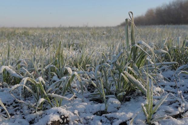 Укргидрометцентр не увидел угрозы вымерзания озимых из-за резкого похолодания