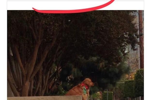 Самый забавный пес в мире, который заигрывает с прохожими, стал звездой Сети