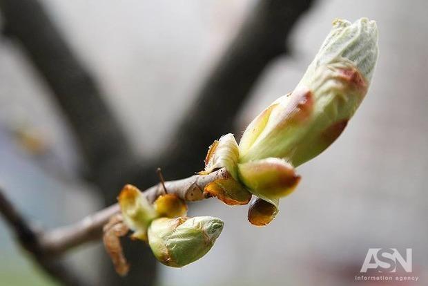 Сади рассаду и собирай росу. Народные приметы на 6 мая - Юрьев день