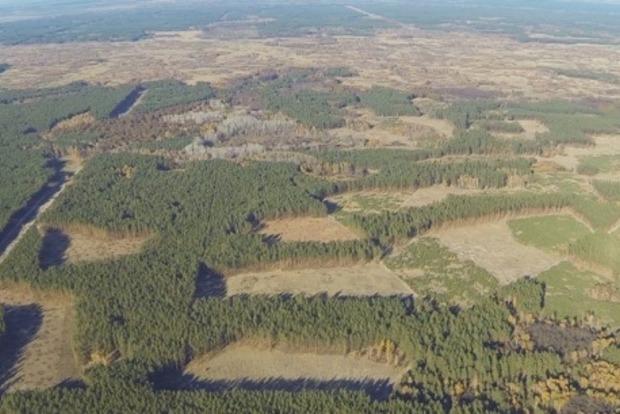 С воздуха сняли огромные масштабы вырубки лесов в Винницкой области (видео)