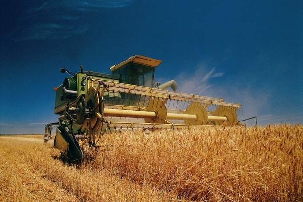 Эксперт прогнозирует уменьшение урожая зерновых из-за правительства и заморозков
