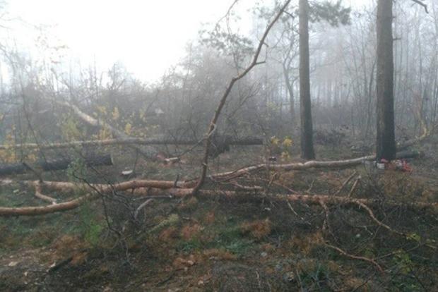 Под кафешку или магазинчик. Неизвестные посреди Киева вырубили лес