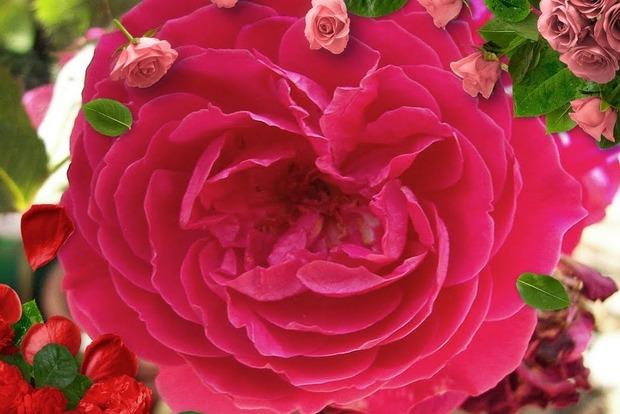 В Мелитополе на цветочных рынках предлагают удивить женщин гигантскими розами
