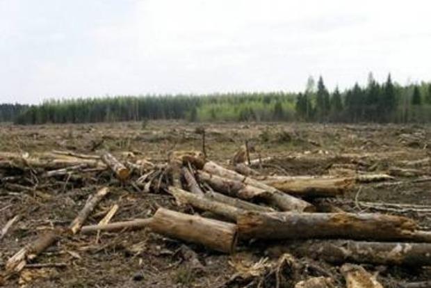 Пограничники способствовали масштабной вырубке леса