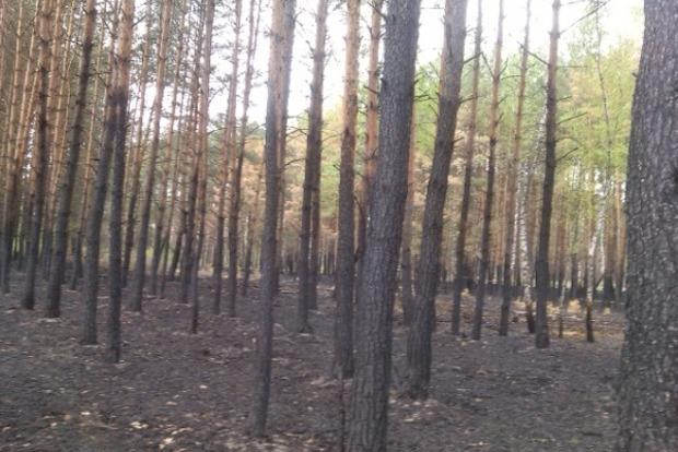 Лесные пожары в Чернобыльской зоне,  или Тушите панику!