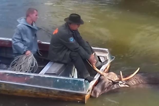 Появилось видео, как полиция спасла лося из радиоактивного озера возле ЧАЭС