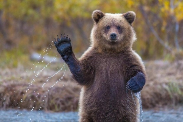 Типичное российское утро: Медведь прогулялся по рынку на Камчатке