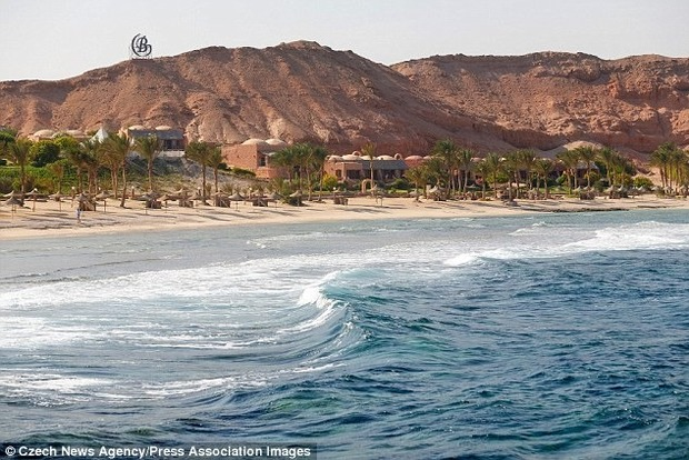 В Египте акула убила туриста, нырнувшего с аквалангом