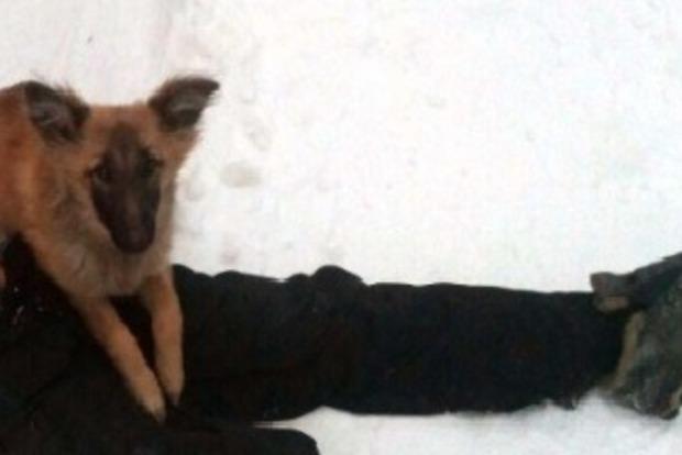 Собака охраняла умершего хозяина до приезда полиции (18+)