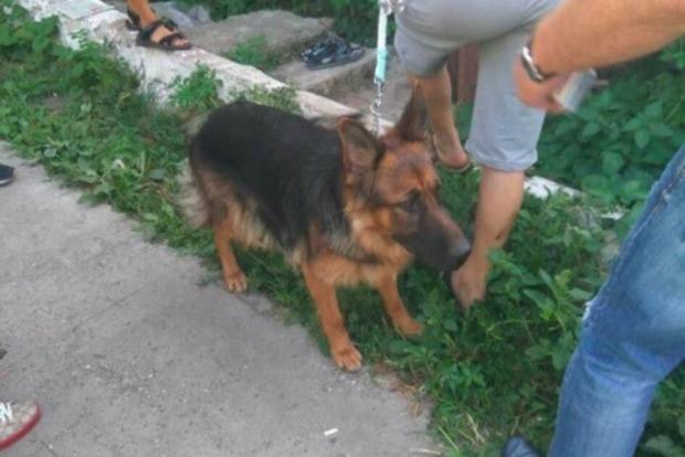 В Одессе задержана живодерка, которая опубликовала в сети видео с повешением собаки