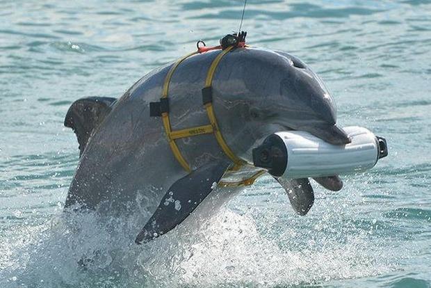 Украинские боевые дельфины погибли в Крыму