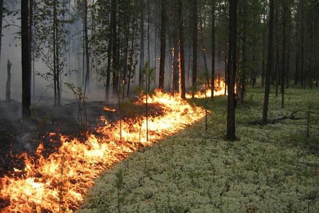 В Житомирской области горит заповедник