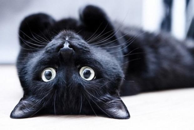 Что значит, если к дому или квартире прибилась черная кошка