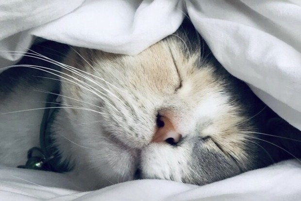 Медики подсказали, на каком боку нужно засыпать