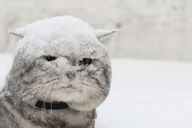 Температура знову піде в мінус. Синоптики дали прогноз