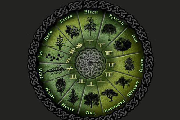 Ти - дерево. Точна кельтська астрологія і її незвичайні знаки