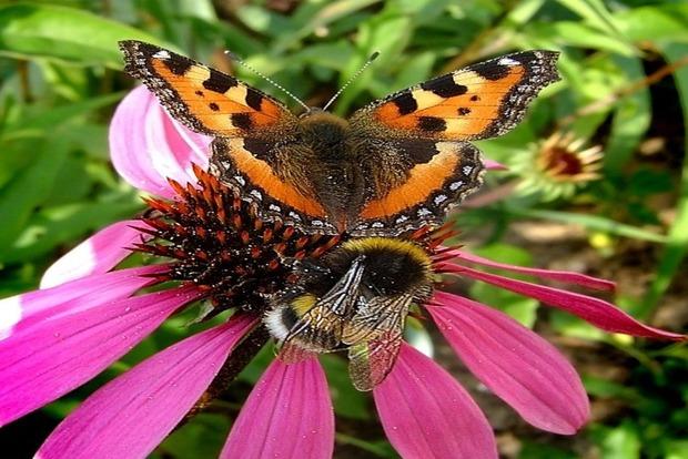 В Британии из-за погоды сократилось число шмелей и бабочек