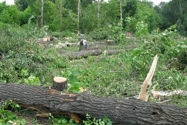 Мораторий в действии: за 15 лет в столице вырубили 4 тысячи гектаров зеленых насаждений