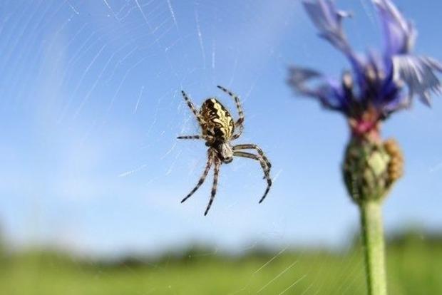 Почему запрещается убивать пауков в доме