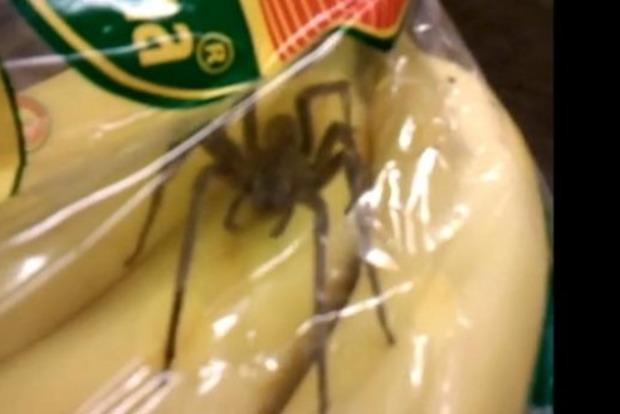 У бананах виявлені смертельно небезпечні павуки
