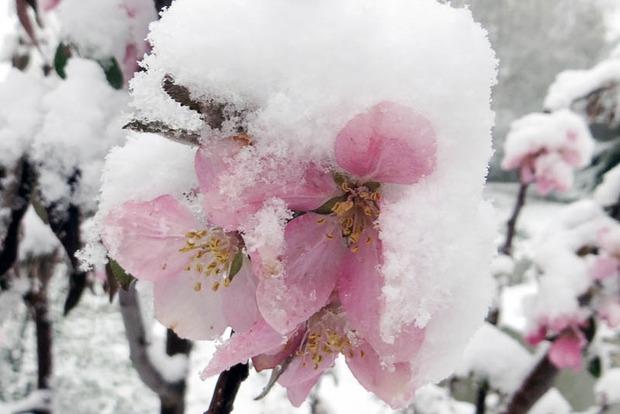 Морозы уничтожили 30% урожая плодовых в Украине - Гидрометцентр