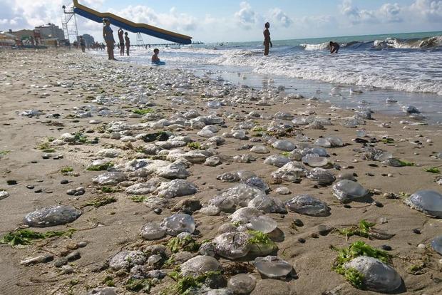 Нашествие медуз превратило Черное море в молочный кисель