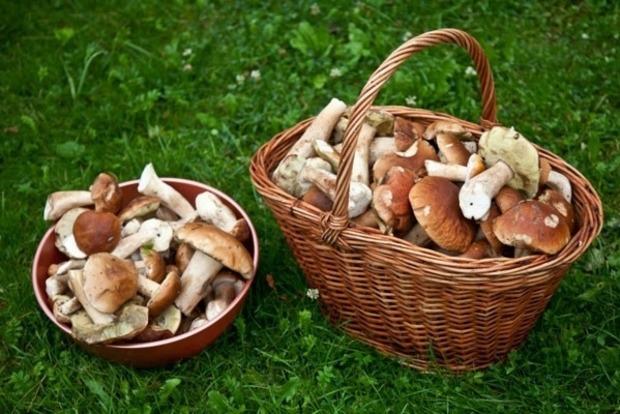 Отказались от госпитализации: в селе на Херсонщине от грибов умерла семья