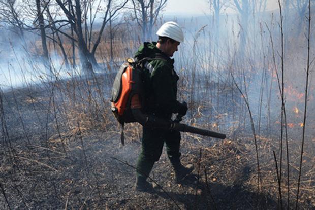 Невигідно: у Красноярському краї пожежні вирішили не гасити пожежу на 5 тисяча га лісу